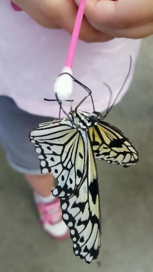NYS Fair Butterfly