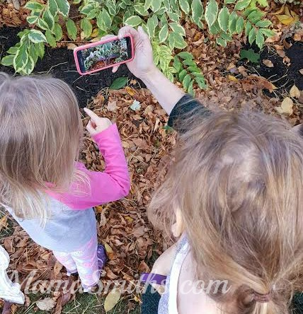 nature-cat-great-outdoors-app-photo