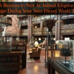 5 Reasons to Stay At Animal Kingdom Lodge During Your Next Disney World Trip | #Disney #DisneyWorld