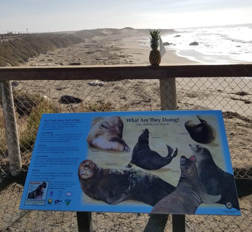 Kia Niro Road Trip San Simeon Seals