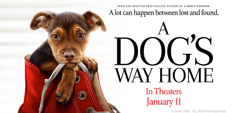 A Dog's Way Home in theaters jan 11