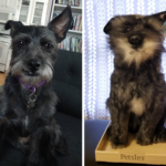 Create A Memorable Gift For Any Pet Lover with A Custom Plush from Petsies