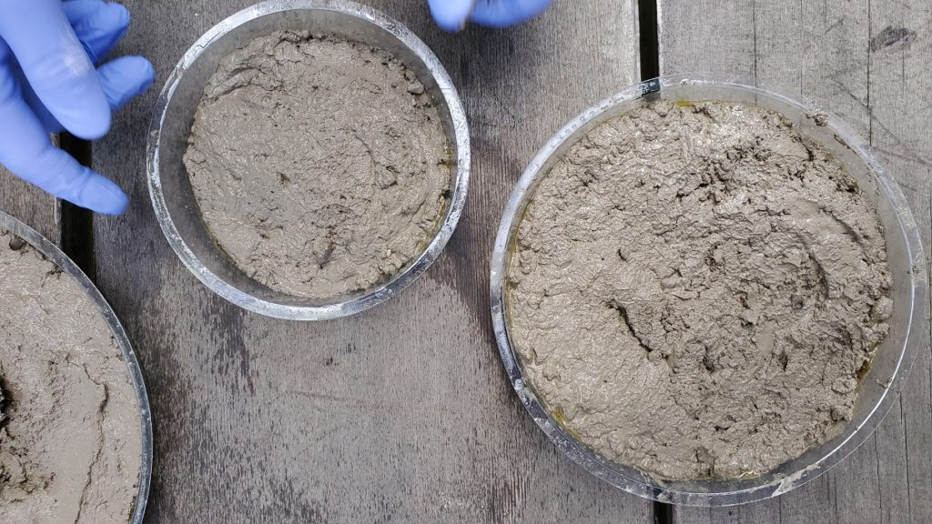 DIY Dinosaur Stepping Stones Poured Cement