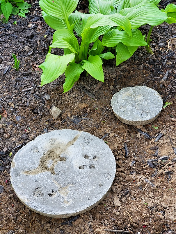 DIY Dinosaur Stepping Stones in Garden