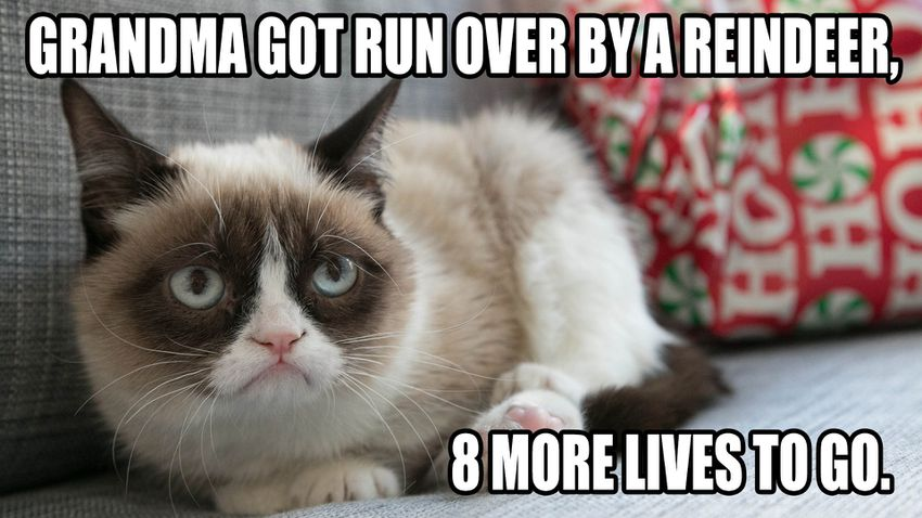 Funny Grumpy Cat Christmas Memes.15 Of The Best Grumpy Cat Memes Rest In Peace Mama S Geeky