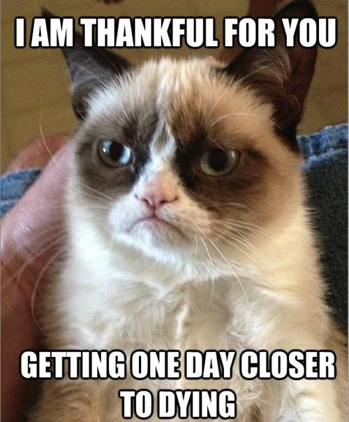 Grumpy-Cat-Meme-thanksgiving