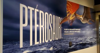 Pterosaur Exhibit Canadian Museum of Nature