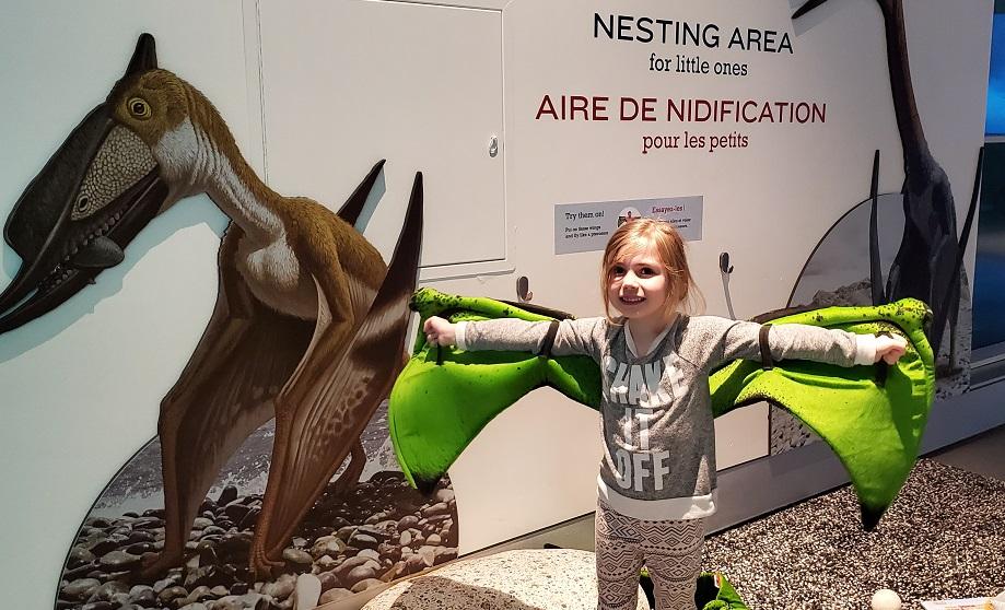 Pterosaur Exhibit nesting area