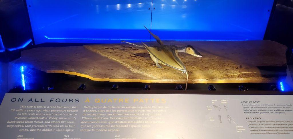 Pterosaur Exhibit on all fours