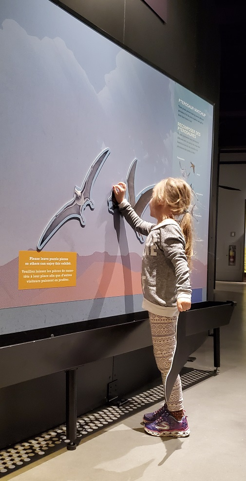 Pterosaur Exhibit puzzle for kids