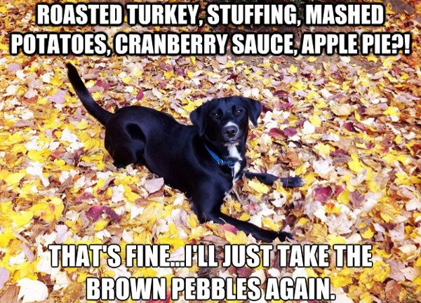 25 Hilarious Thanksgiving Memes That Will Make You Giggle