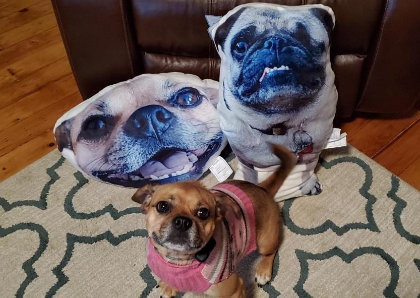 petsies pet pillows