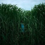 In The Tall Grass Review: A Mess Of A Horror Film